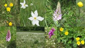 montage fleurs